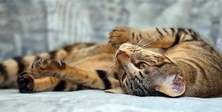 katzen erziehen fraukografie die orienauten. Black Bedroom Furniture Sets. Home Design Ideas